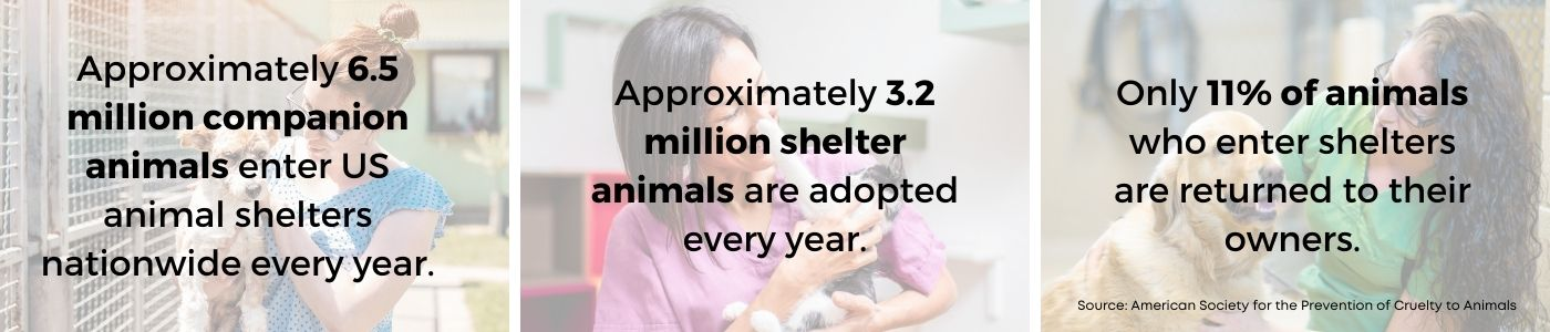Approximately 6.5 million companion animals enter US shelters every year. Approximately 3.2 million shelter animals are adopted every year. Only 11% of animals who enter shelters are returned to their owners.