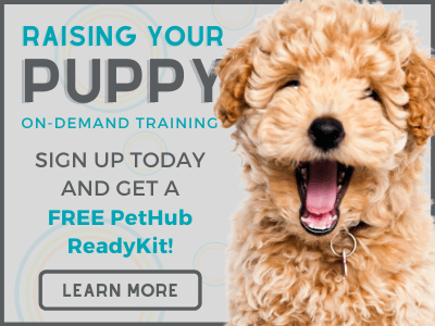 Raising Your Puppy Course - Free ReadyKit