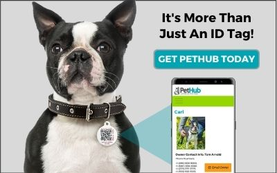 Get PetHub Today with Boston Terrier and Phone with profile