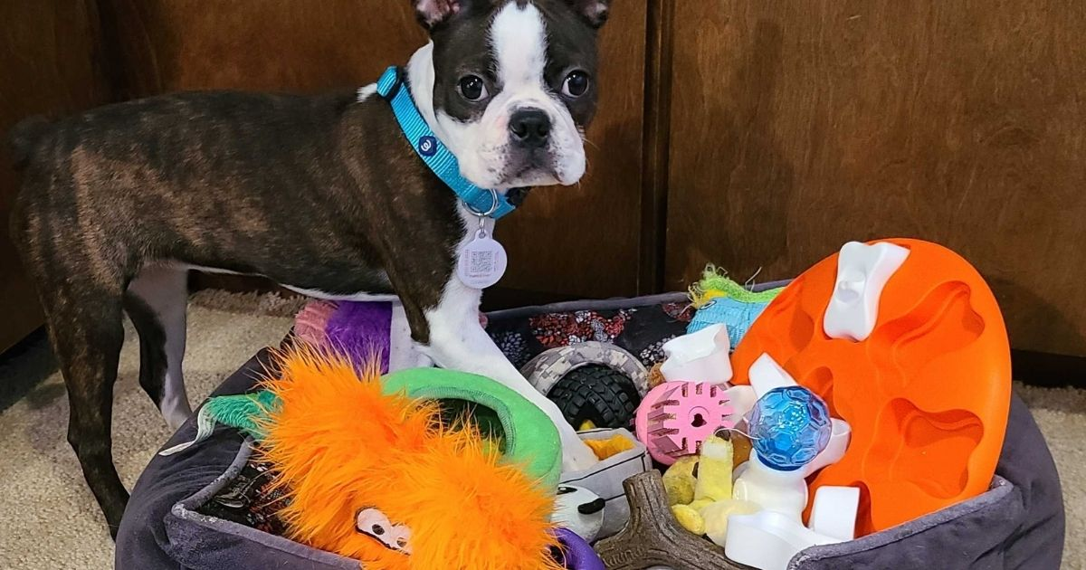 Hedy with all of her fun puppy toys