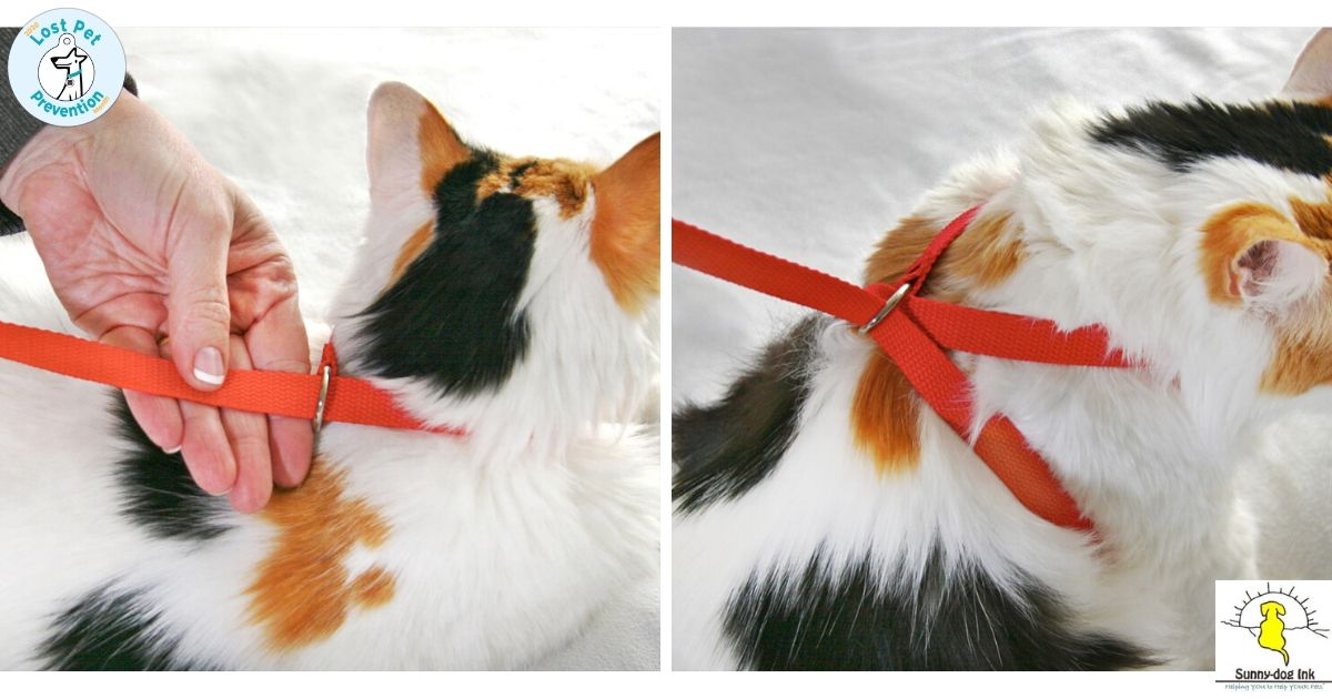 pet harness made with a leash
