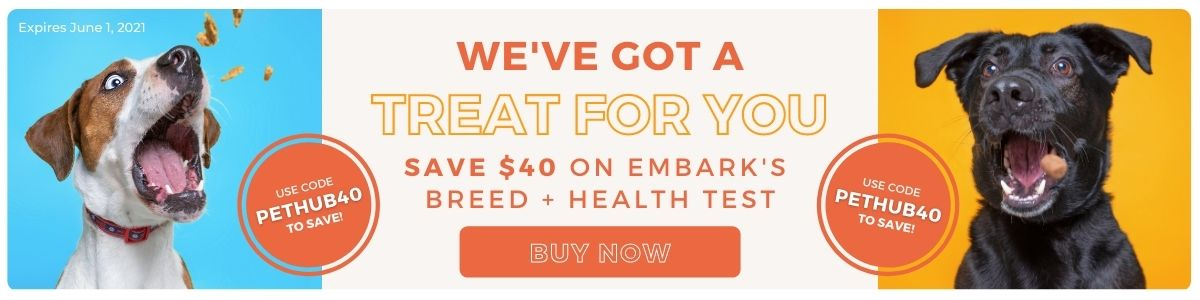 Save $40 on Embark's Breed + Health Test with code PETHUB40