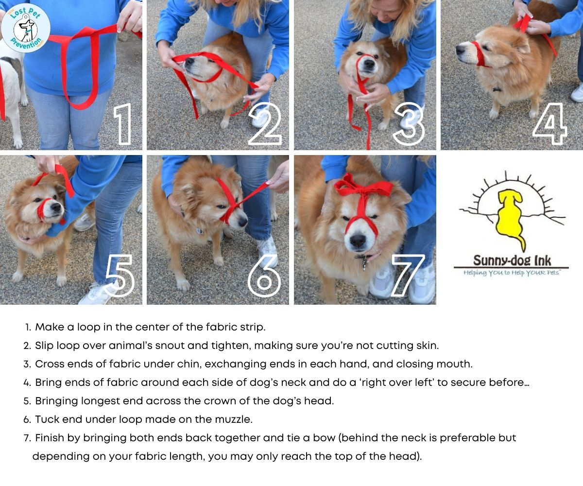 making a pet muzzle with a leash