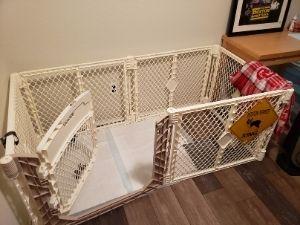 Puppy space in Lorien's office