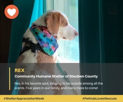 Rex adopted from Community Humane Shelter of Steuben County