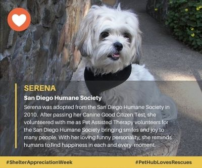 Serena adopted from San Diego Humane Society