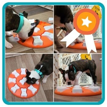 Hedy playing with the Nina Ottoson by Outward Hound Smart Puzzle Game