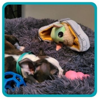 Hedy sleeping next to all of her favorite toys