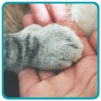 Kitty paw on human hand