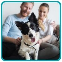Border Collie smiling in front of camera with man and woman