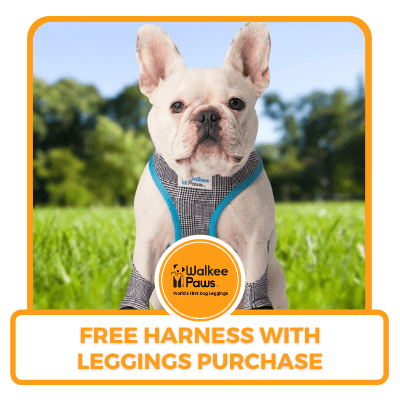Free harness with leggings purchase