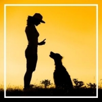 woman training dog to sit in sunset