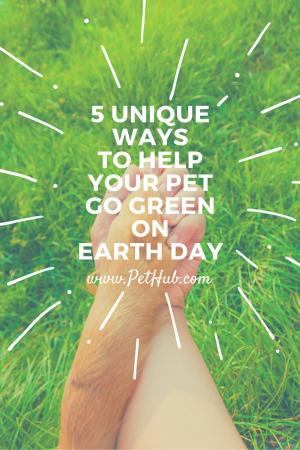 5 Unique Ways to Help Your Pet Go Green on Earth Day