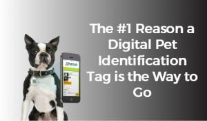 The #1 Reason a digital pet identification tag is the way to go