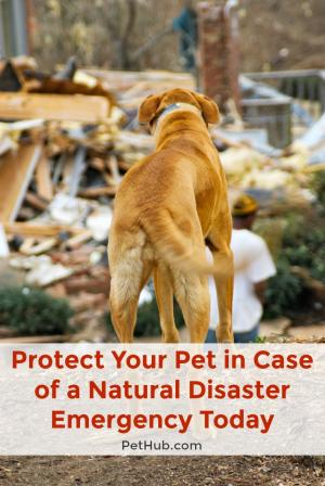 protect your pet in case of a natural disaster emergency today