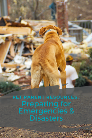 Resources for Pet Parents Being Prepared for Emergencies & Disasters