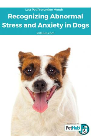 recognizing abnormal stress and anxiety in dogs