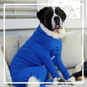 st bernard dog in shed defender