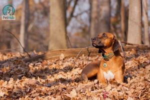 Autumn Safety for Your Dogs and Cats