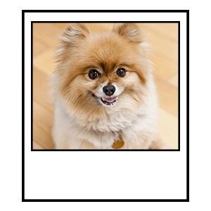 dog in photograph