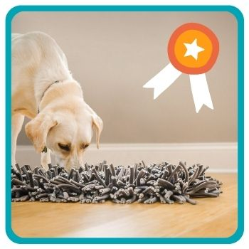 Golden Retriever playing with snuffle mat