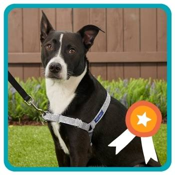Dog wearing the easy walk harness sitting in a backyard