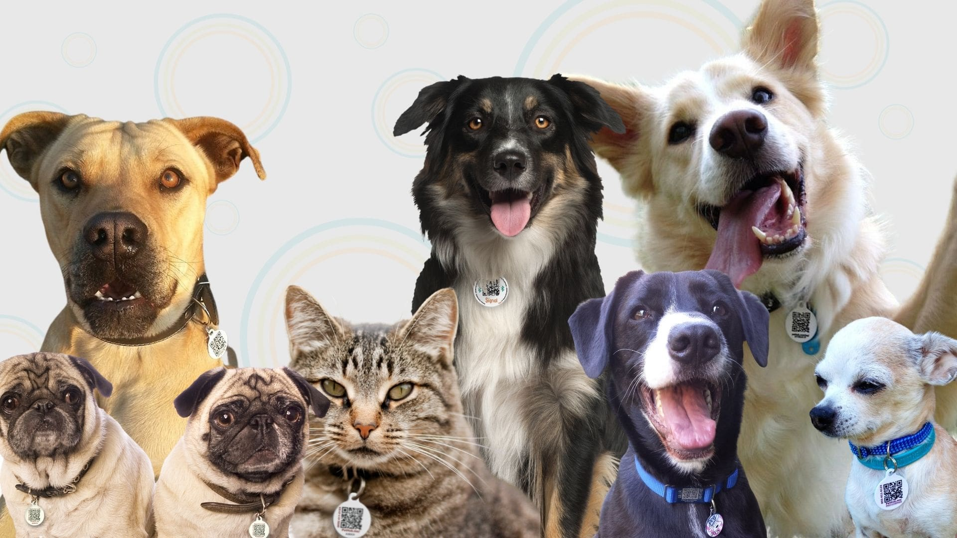 Collage of dogs and cats wearing PetHub tags